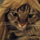 parrucca cani gatti foto 14