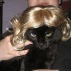 parrucca cani gatti foto 18