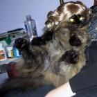 parrucca cani gatti foto 19