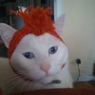 parrucca cani gatti foto 21