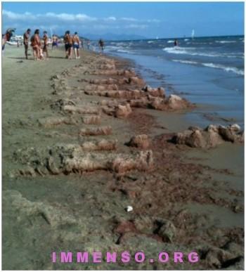 alghe spiaggia scauri foto 01 350x387