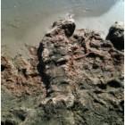 alghe spiaggia scauri foto 02