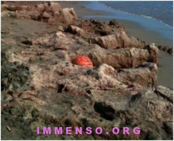 alghe spiaggia scauri foto 04 350x284