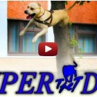 video cane che salta