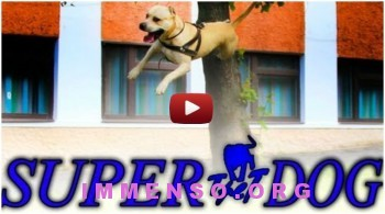 cane che salta video 350x195