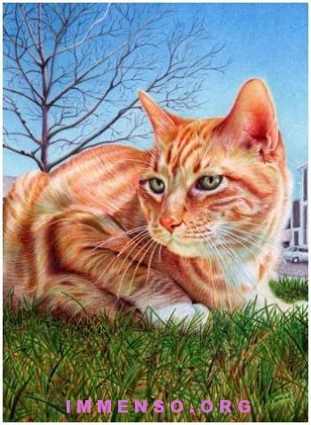 disegno a penna bel gatto samuel silva 350x478