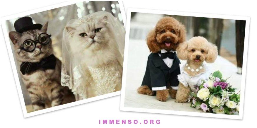 foto curiose animali con abiti matrimonio