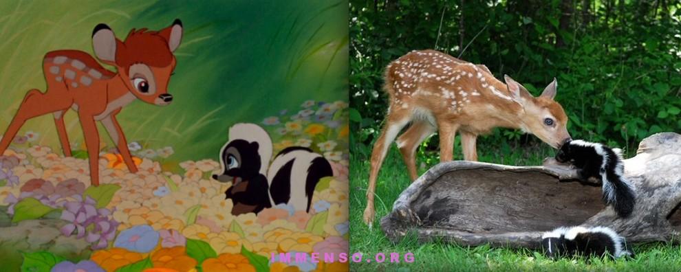 Gli animali dei cartoni animati disney nella realtà foto