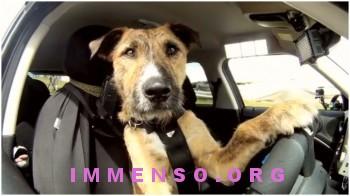cane che guida auto da solo