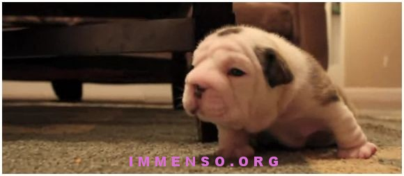 video cagnolino