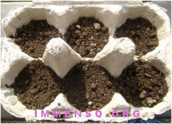 coltivare piante