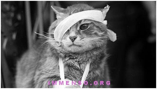 ferite gatto