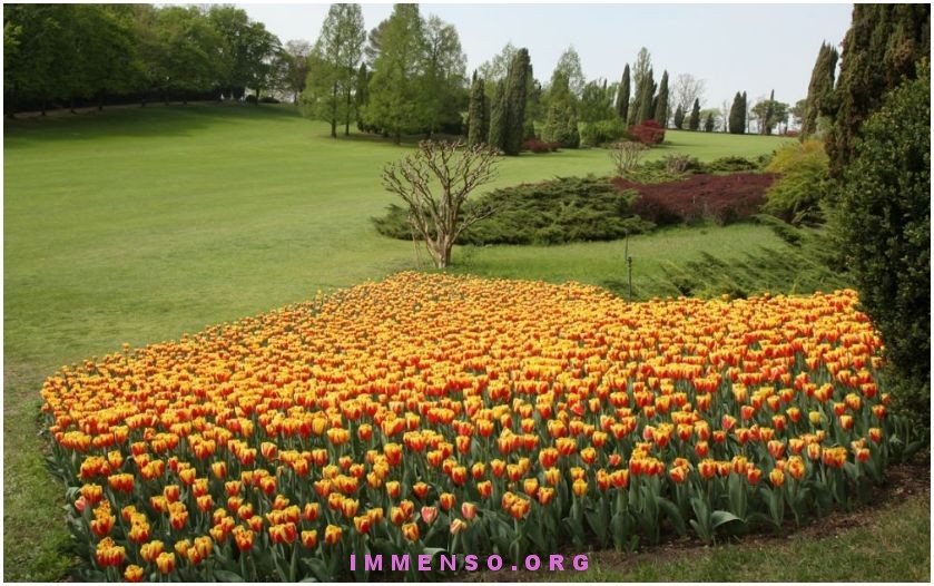 mostra tulipani verona