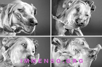 cani che si scuotono foto 09