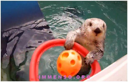 lontra gioca a basket