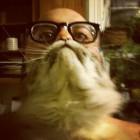 sorriso da gatto cat beards 18