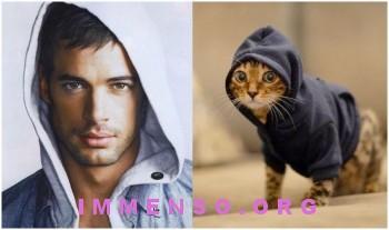 uomini bellissimi con gatti 01