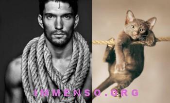 uomini bellissimi con gatti 06