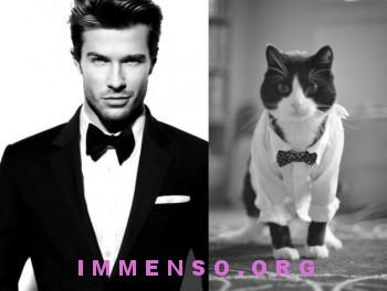 uomini bellissimi con gatti 07