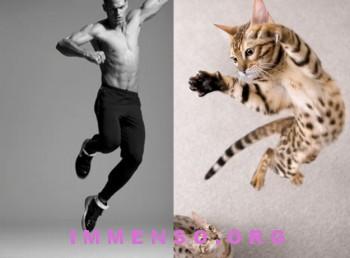 uomini bellissimi con gatti 09