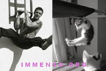 uomini bellissimi con gatti 15