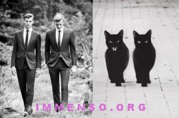 uomini bellissimi con gatti 20