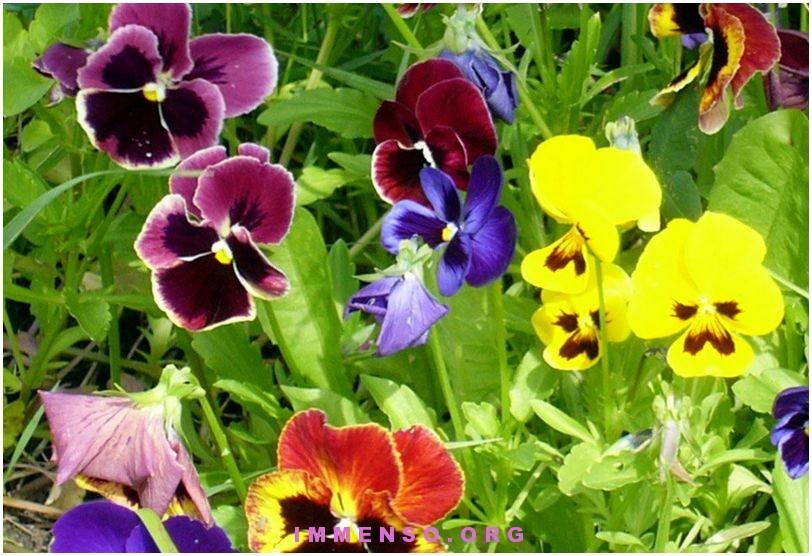 fiori usati in cucina