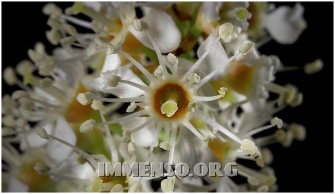 timelapse fioritura