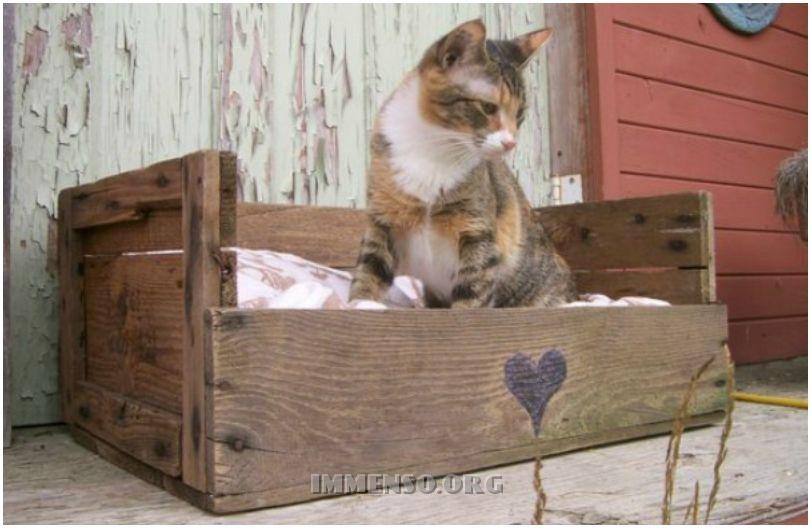 cuccia con cassetta di legno