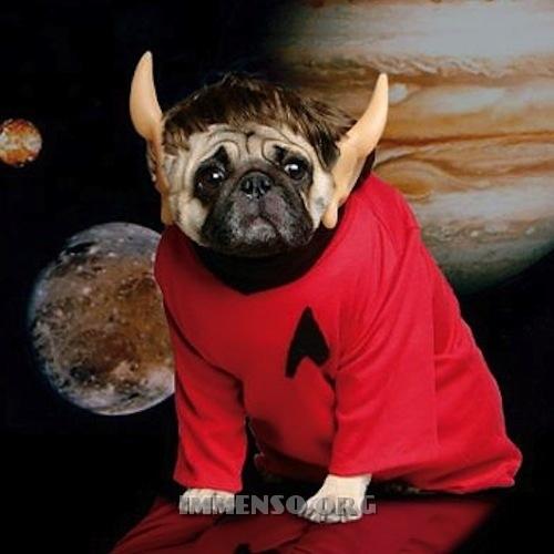 vestiti halloween per cani 02
