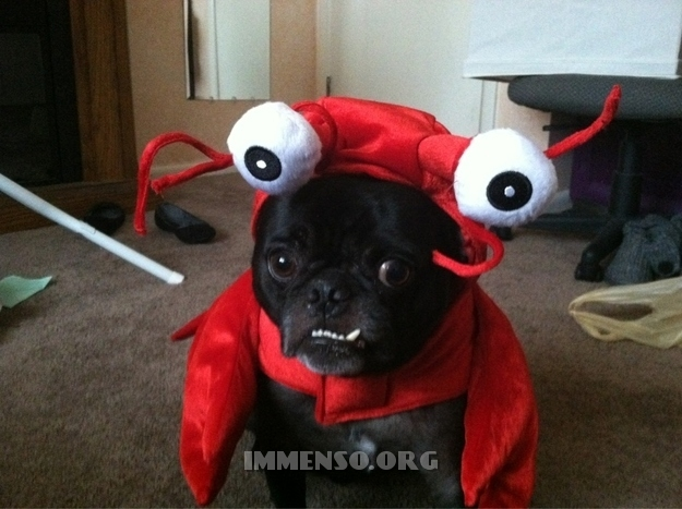 vestiti halloween per cani 08