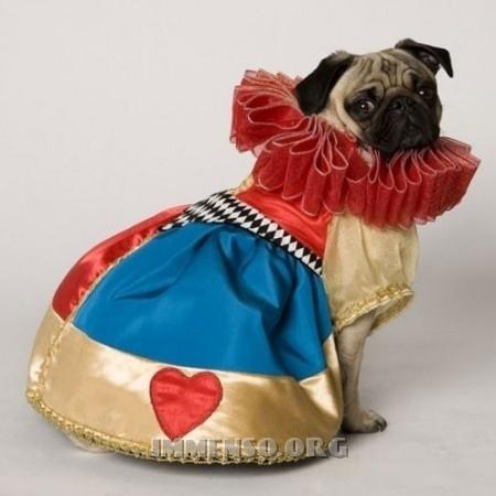 vestiti halloween per cani 11