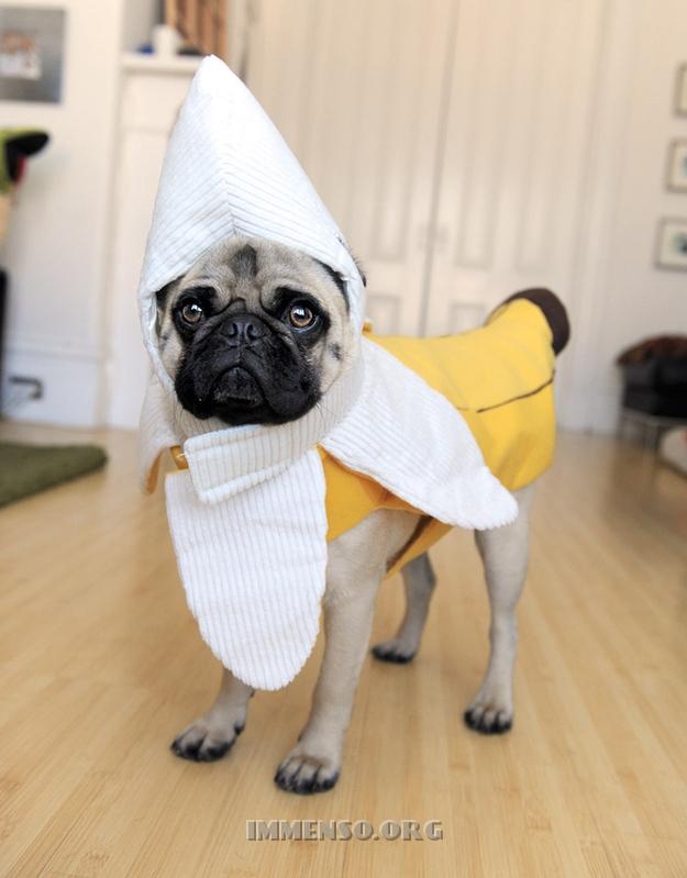vestiti halloween per cani 12