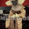 vestiti halloween per cani 14