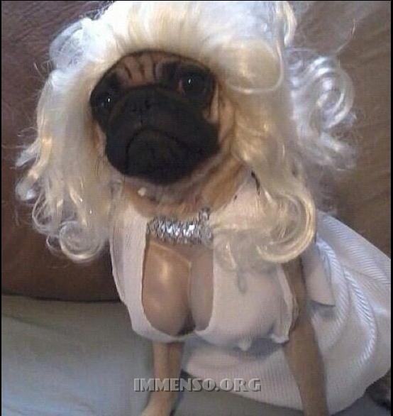 vestiti halloween per cani 16