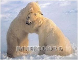 abbracci di orsi