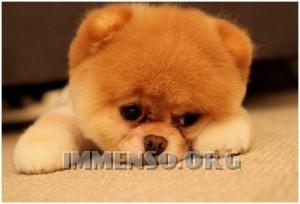 animali tristi