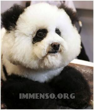 cane panda