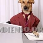 cane vestito da uomo