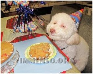 festa compleanno animali