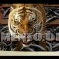 film animali maltrattati