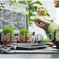 piante in ufficio