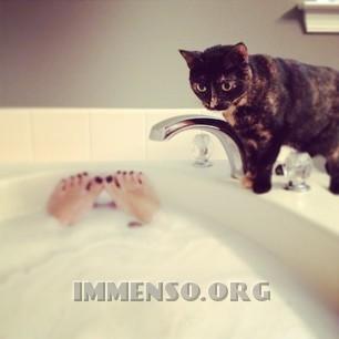 bagno con gatto