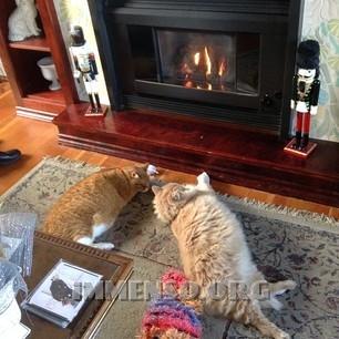 caminetto con gatti