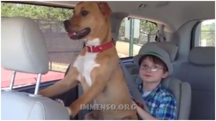 cane bambino autistico