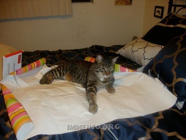 incartare regali con gatti