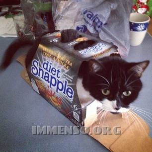 riciclare rifiuti con gatto