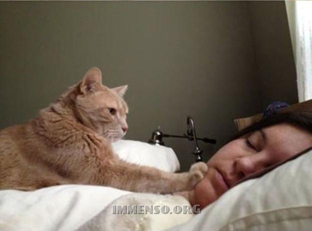sveglia dal gatto
