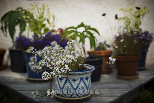 vasi di fiori senza gatto