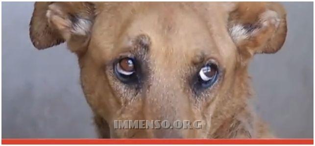 animali maltrattati milano